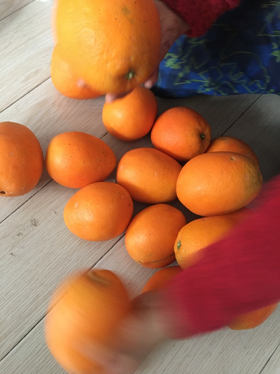 万博网页版万博manbetx体育奉节脐橙,产地直邮欢迎预定manbetx万博体育平台批发